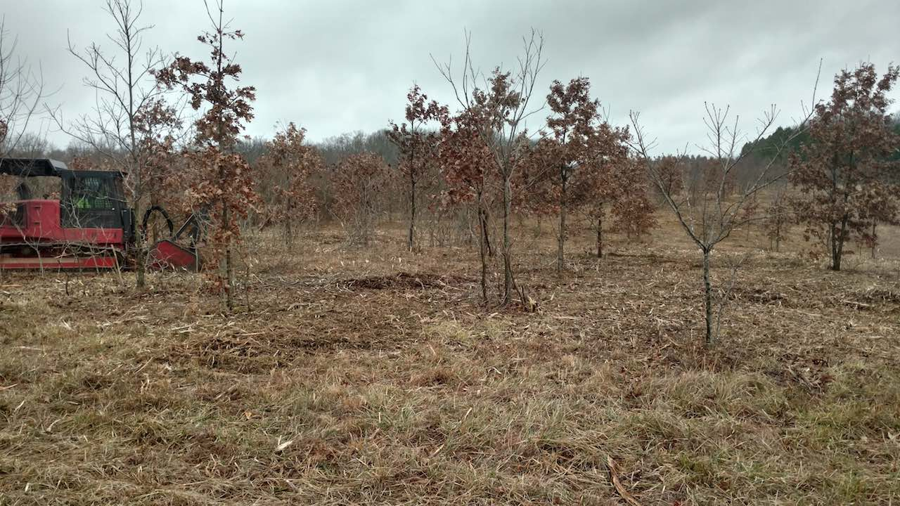 Forestry Mulching Land Clearing Stormwater Erosion